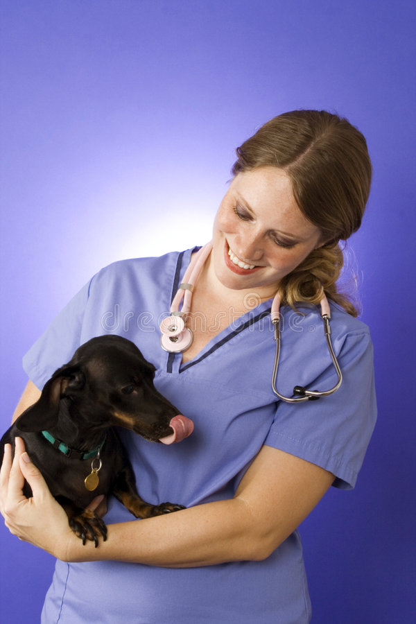 Download Veterinarian stock image. Image of hospital, medical, lady - 2599127