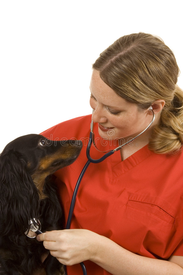 Download Veterinarian stock image. Image of examination, surgeon - 2919999