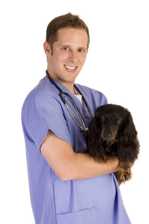 Veterinarian stock photography