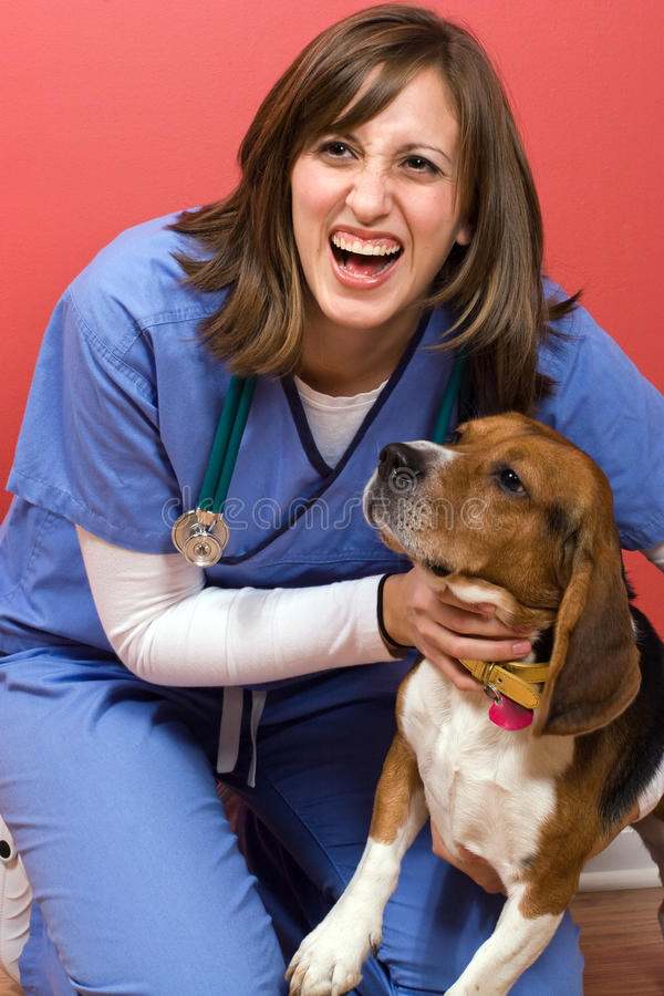 Veterinarian With a Beagle royalty free stock images