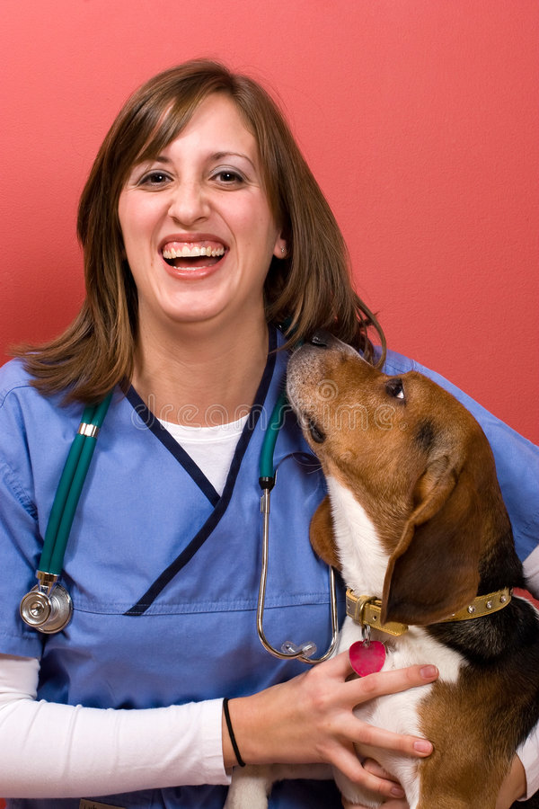 Veterinarian With a Beagle royalty free stock photo
