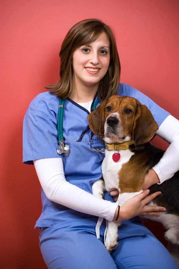 Veterinarian With a Beagle stock image