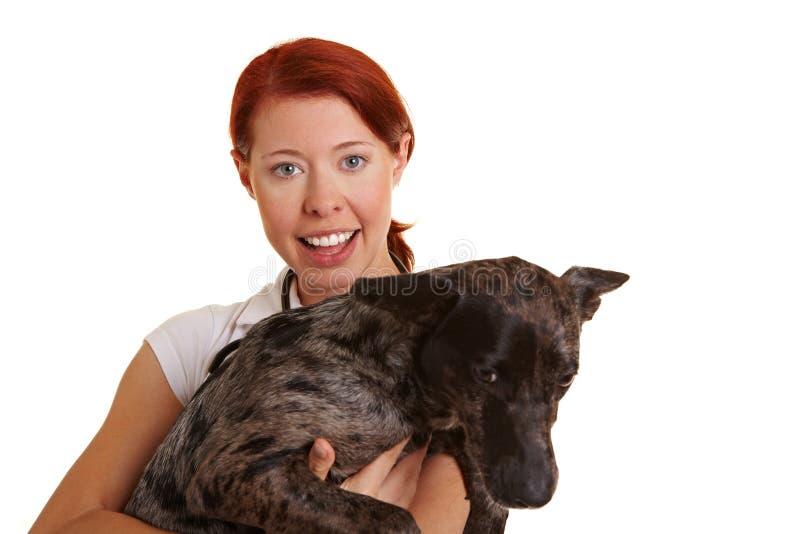 Veterinarian carrying a dog royalty free stock photos