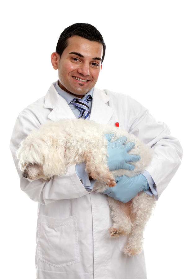Download Veterinarian Carrying A Pet Dog Stock Image - Image: 25643103