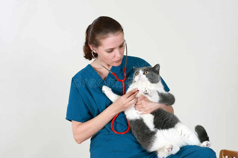 Veterinarian and the cat