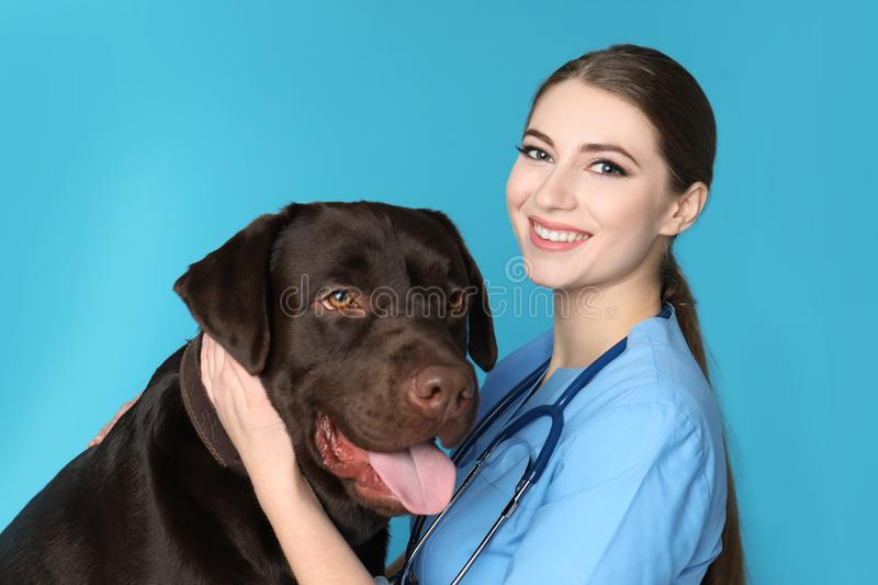 Veterinarian doc with dog on color stock photography