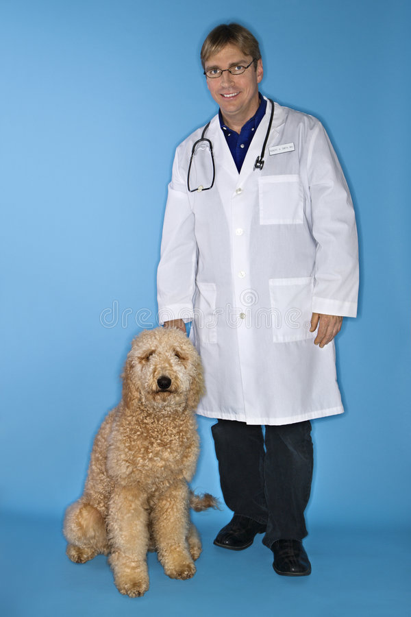 Veterinarian with dog. stock photography