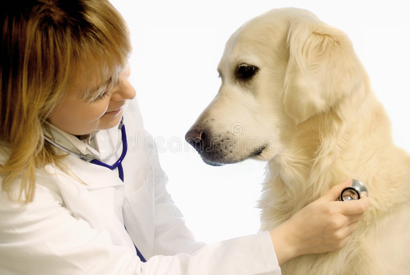 Veterinarian with dog royalty free stock photography