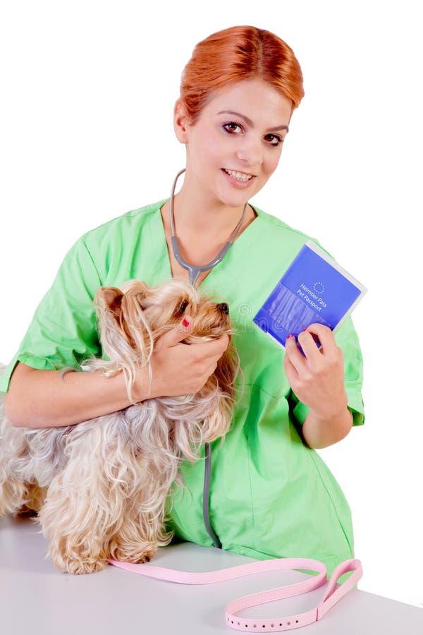 Veterinarian with dog. And pet passport stock photo