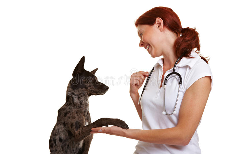 Veterinarian and dog shaking hands stock image