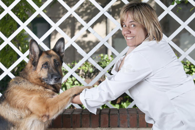 Download Veterinarian friend stock image. Image of lovely, give - 27138649