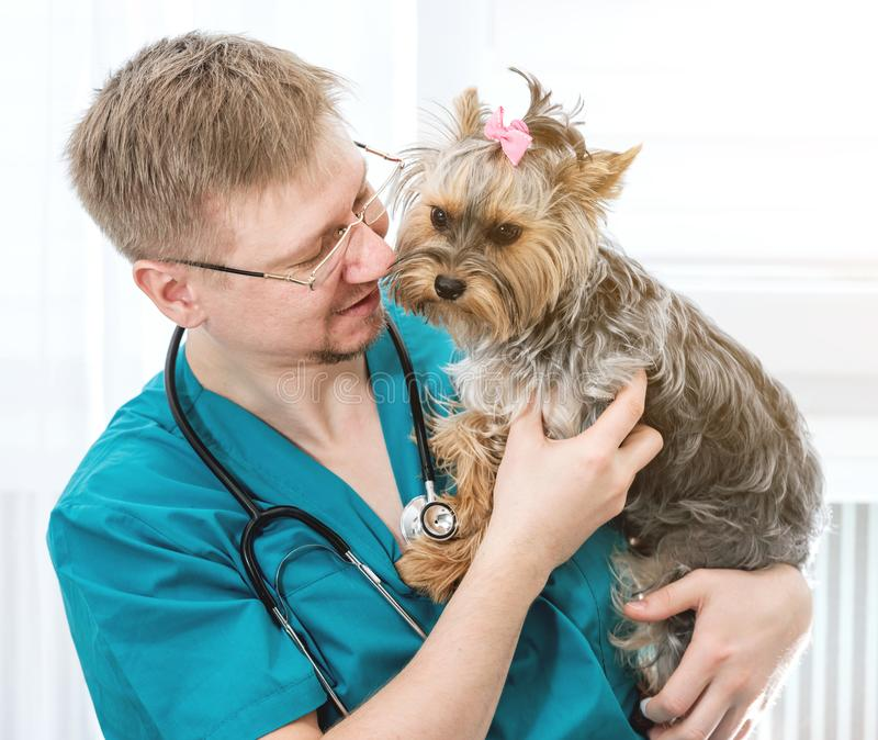 Veterinarian holding dog on hands at vet clinic stock images