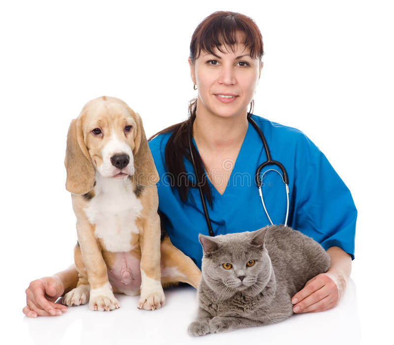 Veterinarian hugging cat and dog. isolated on white background.  royalty free stock photography