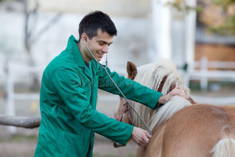Veterinarian with pony horse royalty free stock image