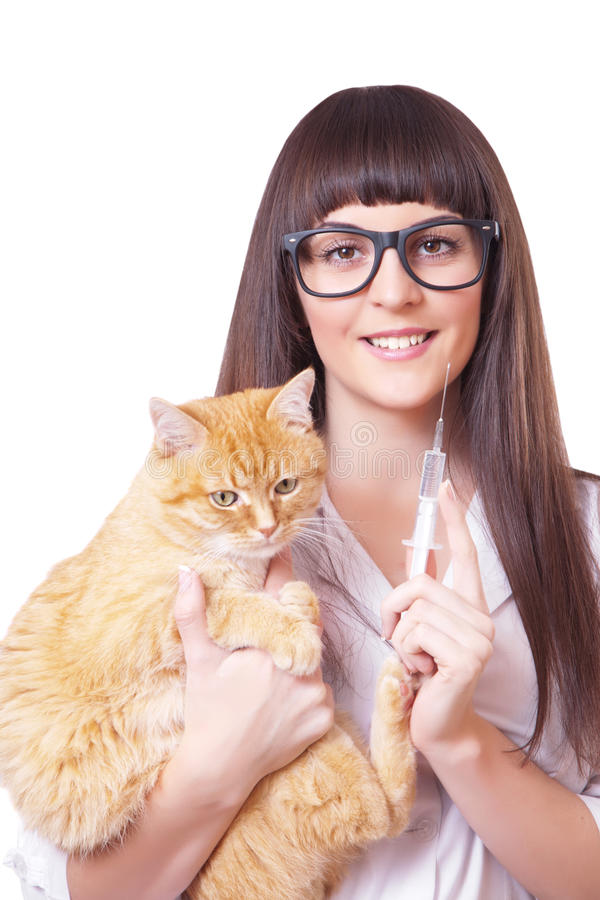 Veterinarian with a syringe in hand holds red cat royalty free stock images