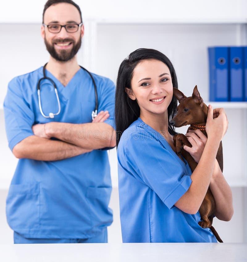 veterinario fotografía de archivo libre de regalías