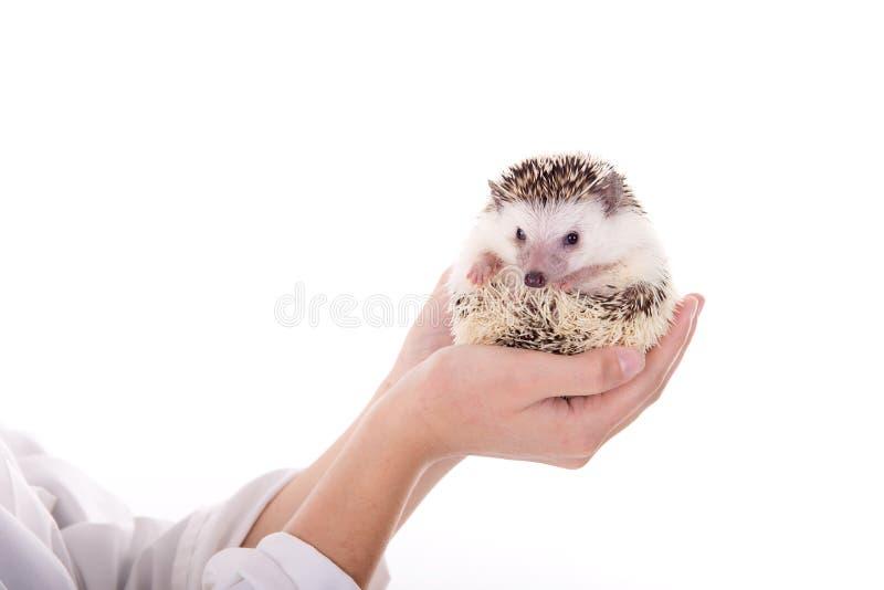 veterinario imágenes de archivo libres de regalías