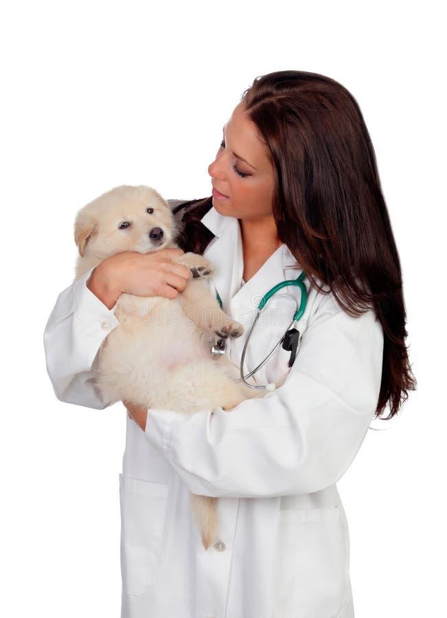 Veterinario bonito con un perrito lindo imagen de archivo libre de regalías