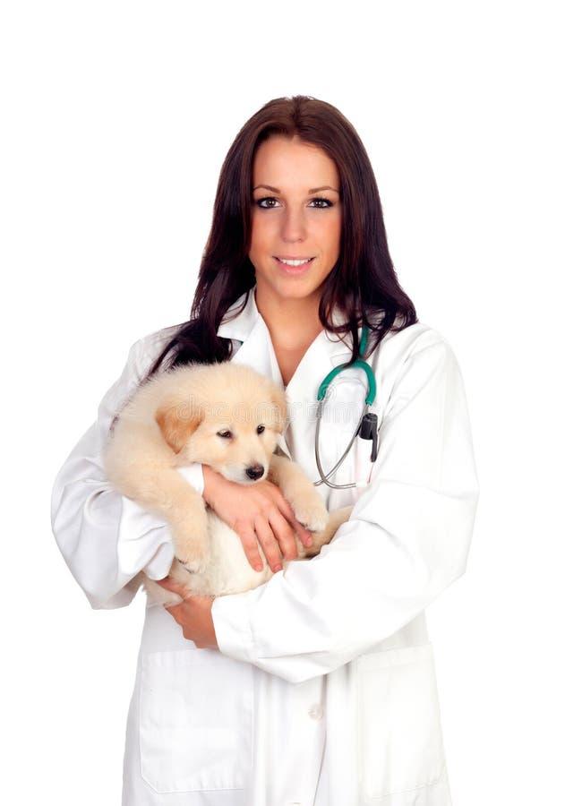 Veterinario bonito con un perrito lindo imagen de archivo