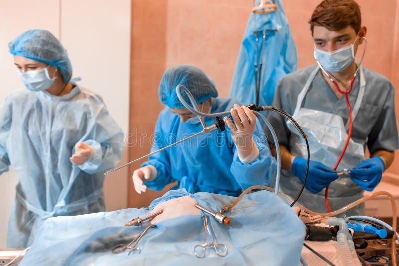 Veterinario che fa l'operazione per la sterilizzazione Il gatto sul tavolo operatorio in una clinica veterinaria Gatto in chirurg fotografia stock
