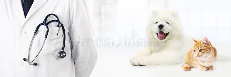 Download Veterinario Con El Estetoscopio En Bolsillo, Perro Y Gato En W Foto de archivo - Imagen de médico, animal: 100535272