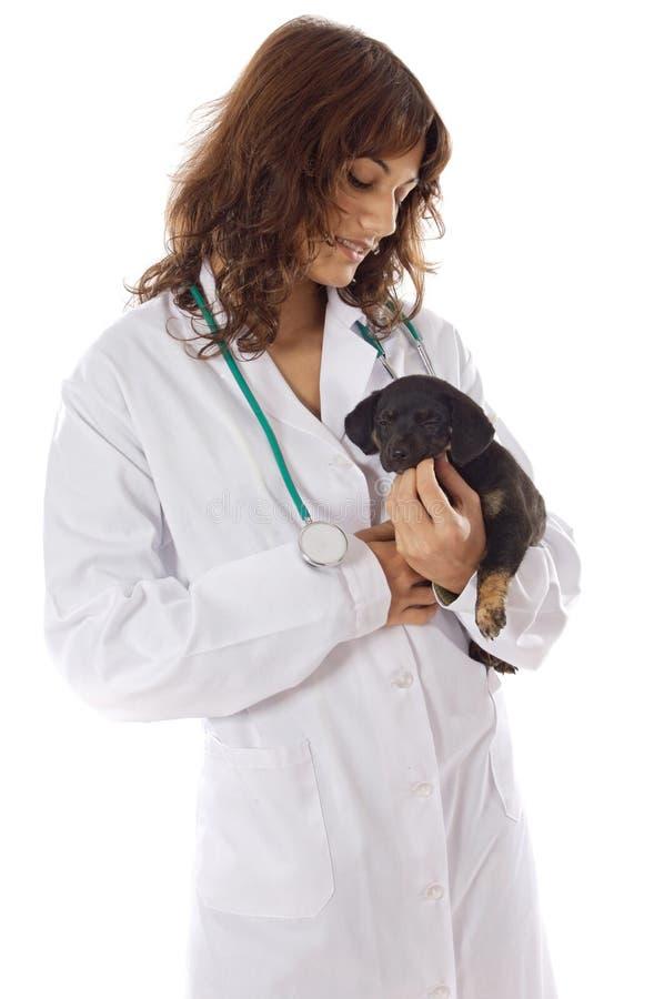 Veterinario con el perro fotografía de archivo