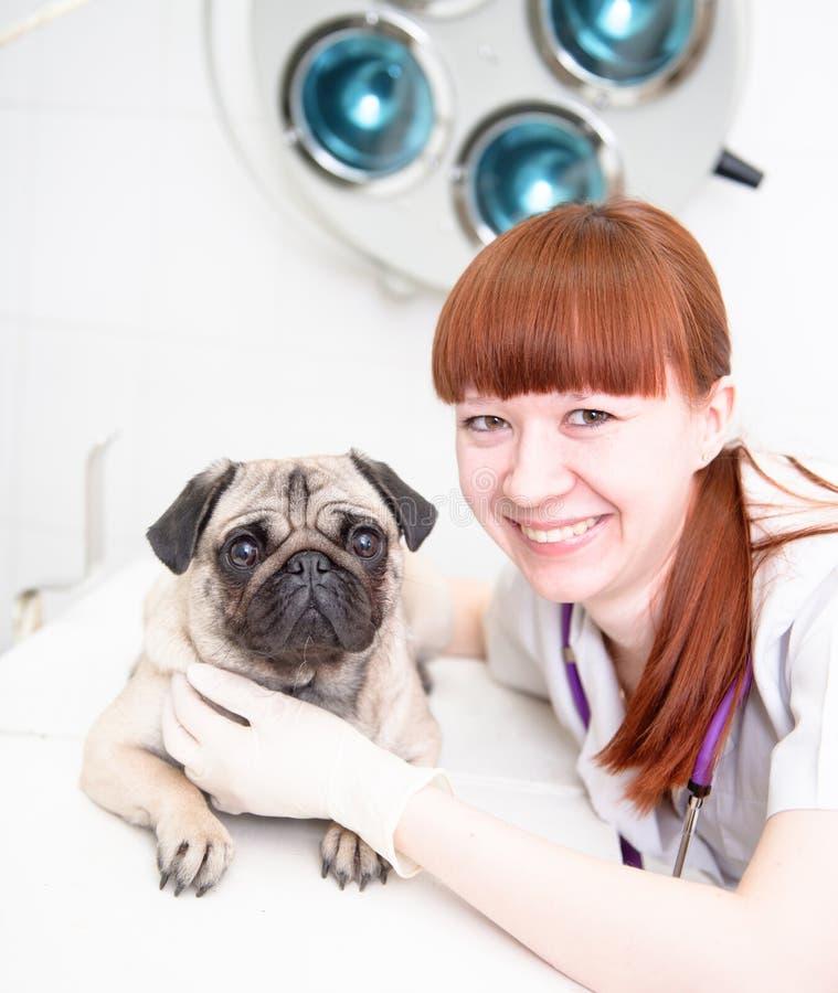 Veterinario con el perro en clínica veterinaria imagen de archivo