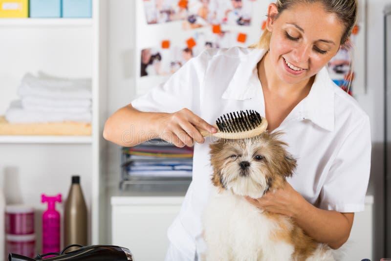 Veterinario con su perro Shih Tzu fotos de archivo