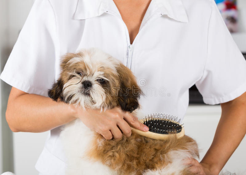 Veterinario con su perro Shih Tzu imagenes de archivo