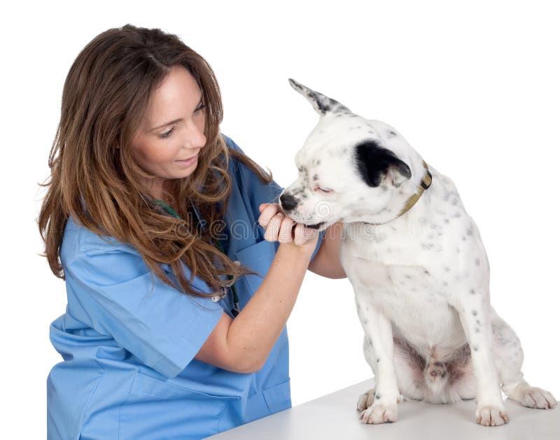 Veterinario con un cane per una rassegna fotografie stock libere da diritti