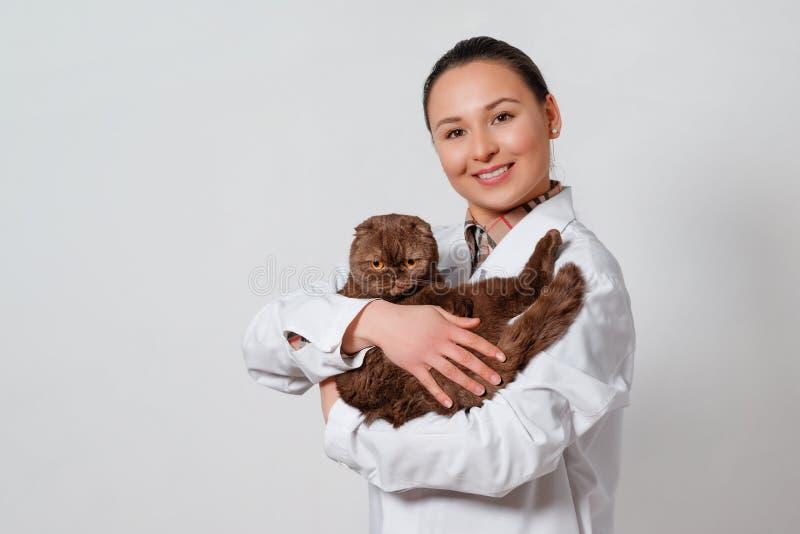Veterinario de la chica joven en ropa de funcionamiento con un gato divertido en sus brazos en fondo ligero imágenes de archivo libres de regalías