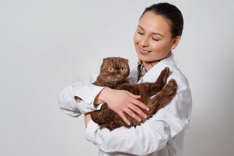 Veterinario de la chica joven en ropa de funcionamiento con un gato divertido en sus brazos en fondo ligero foto de archivo