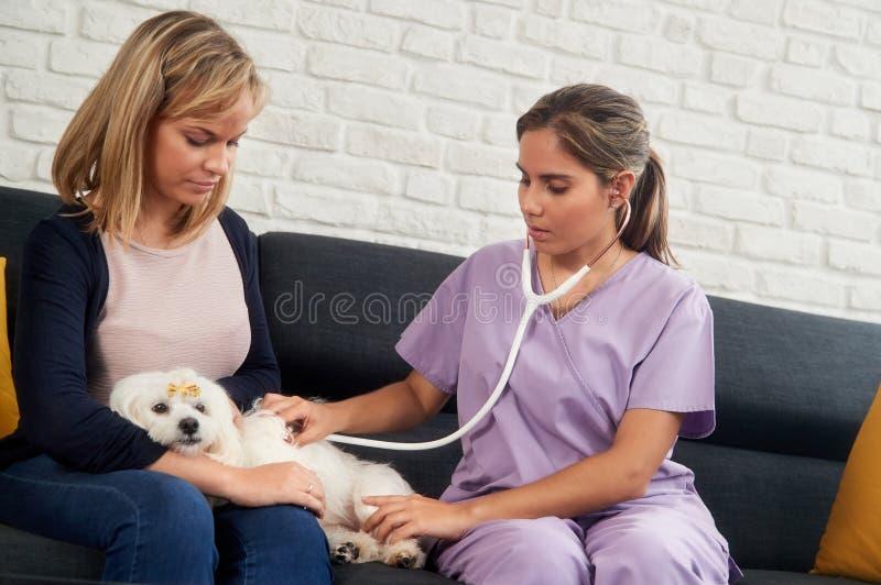 Veterinario de la visita a domicilio con el dueño veterinario del perro y el animal doméstico enfermo fotos de archivo