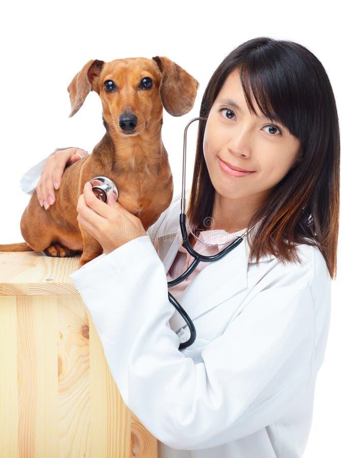 Veterinario de sexo femenino con el perro basset imagen de archivo libre de regalías