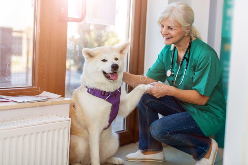 Veterinario de sexo femenino con un perro fotografía de archivo libre de regalías