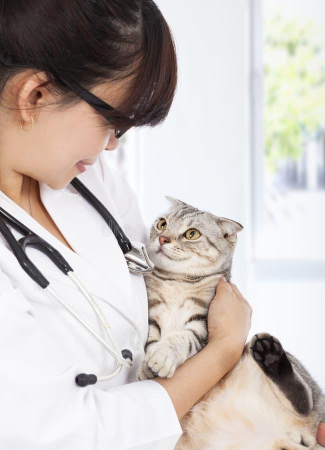 Veterinario de sexo femenino joven que sostiene el gato enfermo en la clínica foto de archivo
