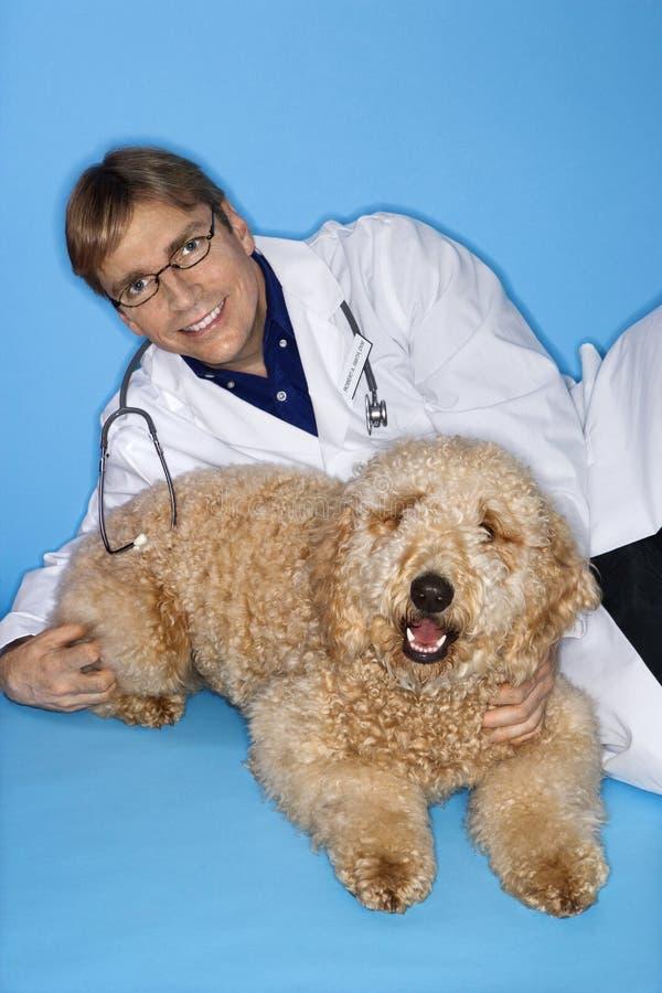 Veterinario de sexo masculino con el perro de Goldendoodle. imagen de archivo