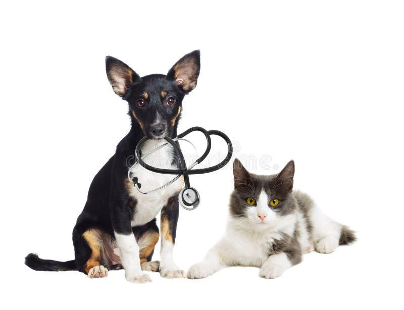 Veterinario del perrito y del gatito imágenes de archivo libres de regalías