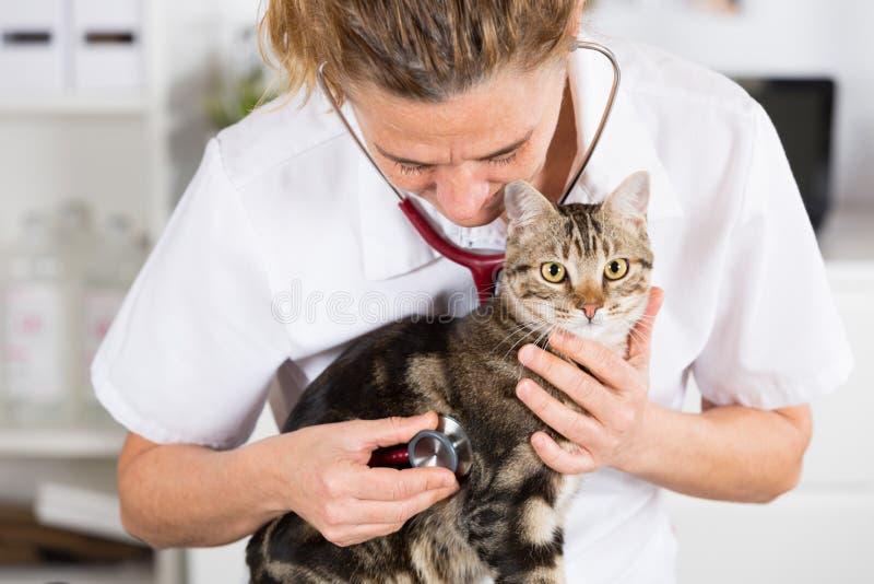 Veterinario escuchando un gato imagen de archivo