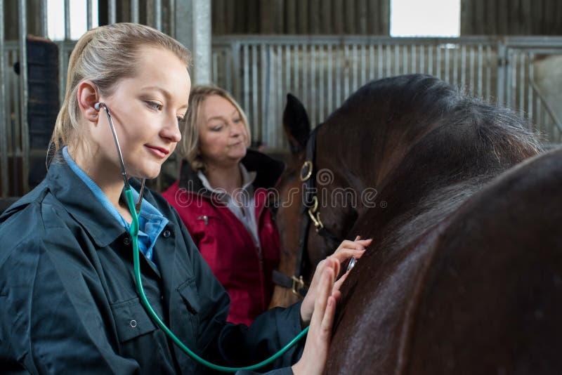 Veterinario femminile che dà esame medico al cavallo in stalla fotografia stock