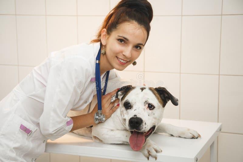 Veterinario femminile con il cane alla clinica del veterinario fotografie stock