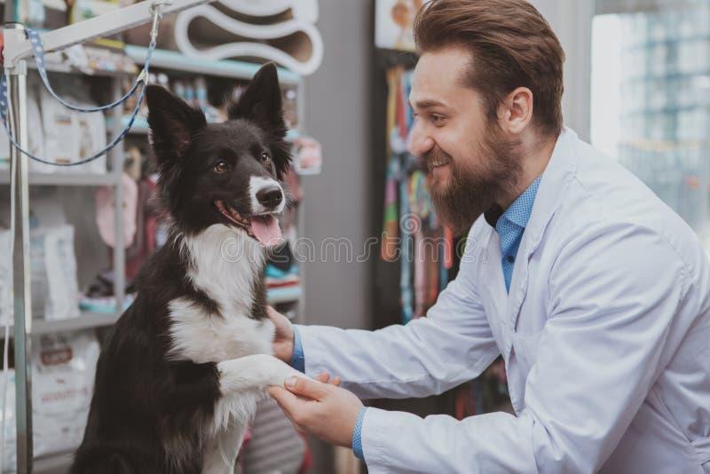 Veterinario maschio barbuto allegro che esamina bello cane fotografia stock libera da diritti