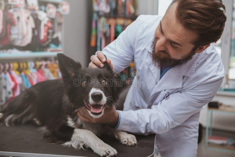 Veterinario maschio barbuto allegro che esamina bello cane immagini stock libere da diritti