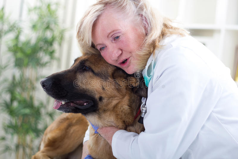 Veterinario mayor sonriente que abraza el perro de pastor alemán fotografía de archivo libre de regalías