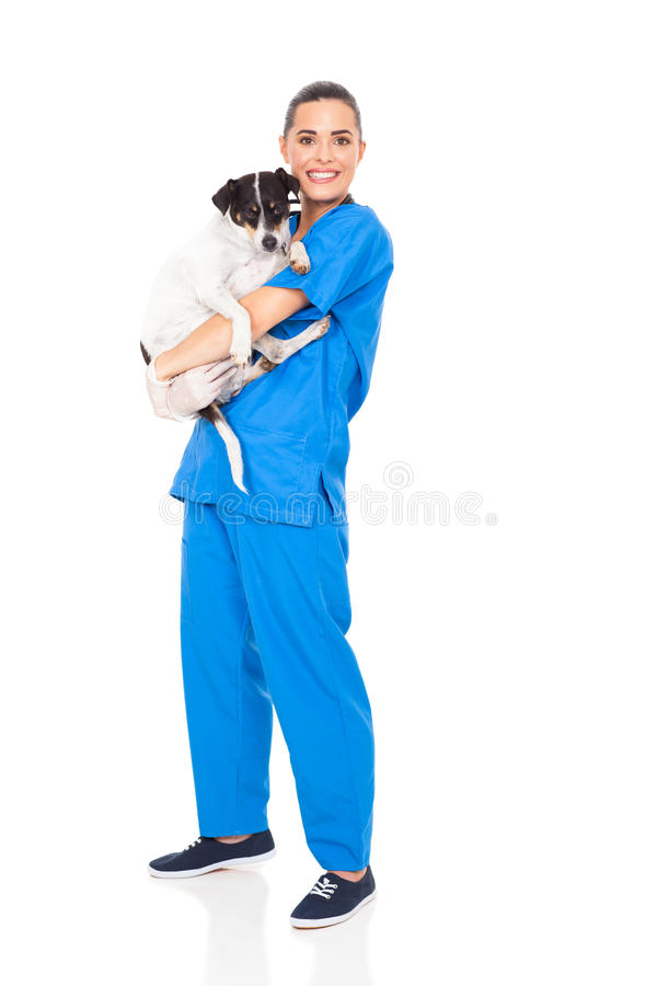 Cane veterinario preoccupantesi fotografia stock