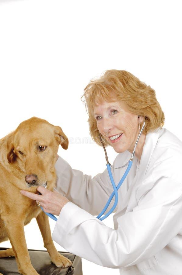 Veterinario que comprueba el perro foto de archivo