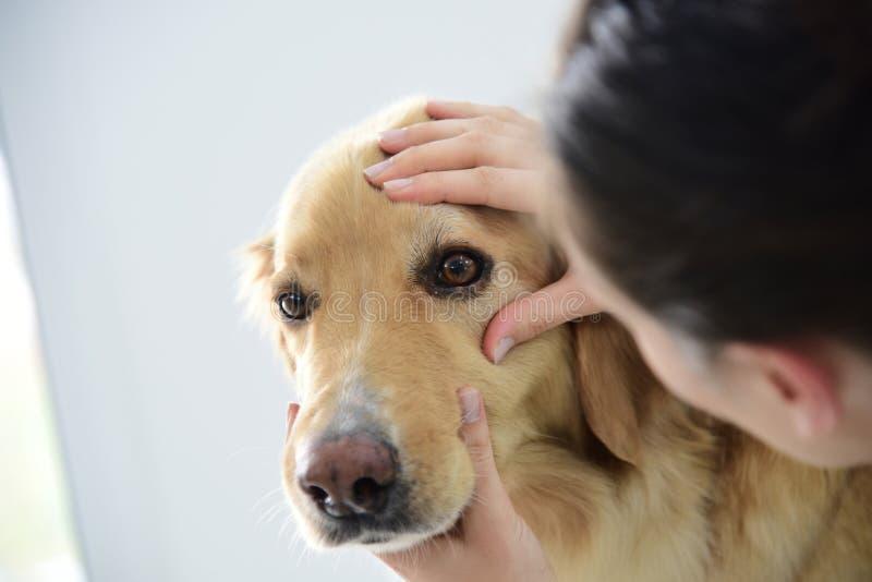 Veterinario que comprueba los ojos del perro fotografía de archivo libre de regalías