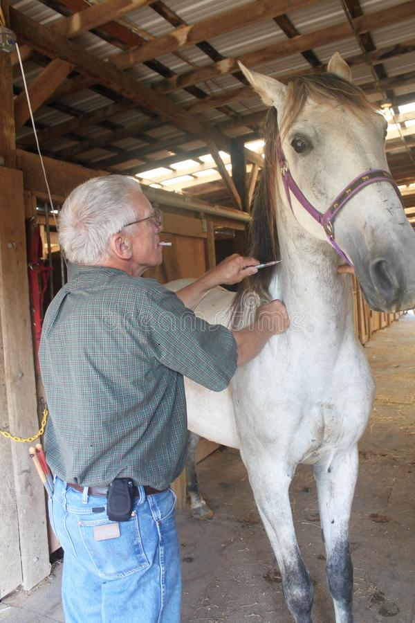 Veterinario que da a un caballo un tiro fotografía de archivo libre de regalías