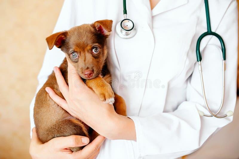 Veterinario que examina un perro lindo fotografía de archivo libre de regalías
