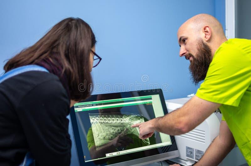 Veterinario que muestra una radiografía a un cliente en un ordenador fotos de archivo libres de regalías
